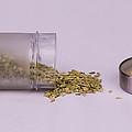 Fennel Seeds Saunf by Saurav Pandey