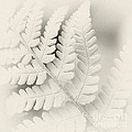 Fern Leaf by Janet Burdon