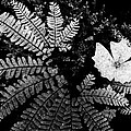 Fern And Trillium by Paul W Sharpe Aka Wizard of Wonders
