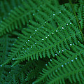 Fern by Christopher Meade