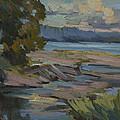 Fern Cove Vashon Island by Diane McClary