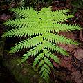 Fern by Ferry Zievinger