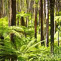Fern Forest by Tim Hester