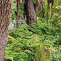 Fern Garden by Kate Brown
