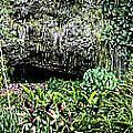 Fern Grotto by Charles Davis