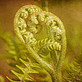 Fern Heart by Peggy Collins