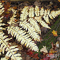 Fern In The Forest by Brenda Brown
