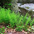 Fern Patch by MTBobbins Photography