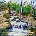 Ferndell Creek Noon  by Randy Sprout