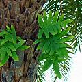 Ferns 1 by Nancy L Marshall