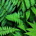 Ferns Along The River by Michael Eingle