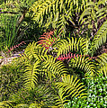 Ferns And More by Kate Brown