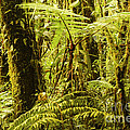 Ferns And Moss by Bob Phillips