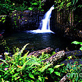 Ferns Flowers And Waterfall by Thomas R Fletcher