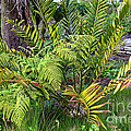 Ferns II by Kate Brown