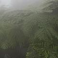 Ferns In Mist by Gary Rieks