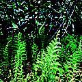 Ferns by Jill DeSousa