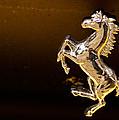 Ferrari Logo by Linda Freebury