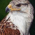 Ferruginous Hawk by Pat Erickson