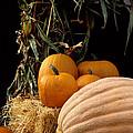 Festive Fall by Sharon Elliott