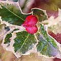 Festive Holly by Vanessa Thomas