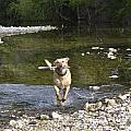 Fetch by Teresa Dixon