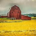 Field And Barn by Grace Grogan