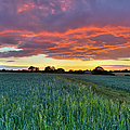 Field At Sunset by Gary Eason