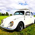 Field Bug by Steve McKinzie
