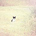 Field Cat by Kellie Prowse
