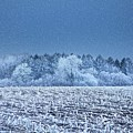 Field Covered In Hoar Frost by Samuel Ashfield/science Photo Library