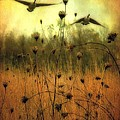 Field Dwellers  by Gothicrow Images