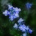 Field In Blue by Jaime Crosas