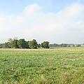 Field In France by Randi Kuhne