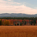 Field In Yellowstone by Sal Terrazas