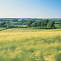 Field Near Barnstaple, North Devon by Panoramic Images