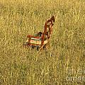 Field Of Chair by Nathanael Smith