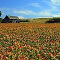 Field Of Color by Gene Praag