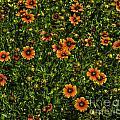 Field Of Flowers by Dale Powell