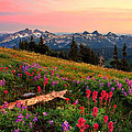 Field Of Flowers by Ingrid Smith-Johnsen