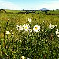 Field Of Flowers by Les Cunliffe
