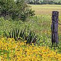 Field Of Flowers by Leticia Latocki