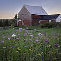 Field Of Flowers by Lisa Bryant