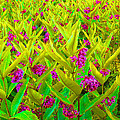 Field Of Flowers by Lynda Davis