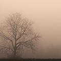 Field Of Fog by Rachel Cohen