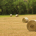 Field Of Freshly Baled Round Hay Bales by James BO  Insogna