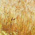 Field Of Gold 1 by Ann Garrett