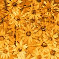 Field Of Gold by Ann Powell