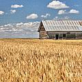 Field Of Grain by Carole  Martinez
