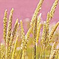 Field Of Grass And Wildflowers IIi by Artist and Photographer Laura Wrede
